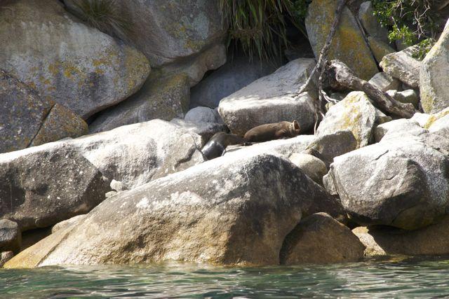 Eindelijk, zeehonden!!